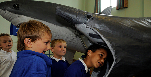 Shark_mouth_portsmouth