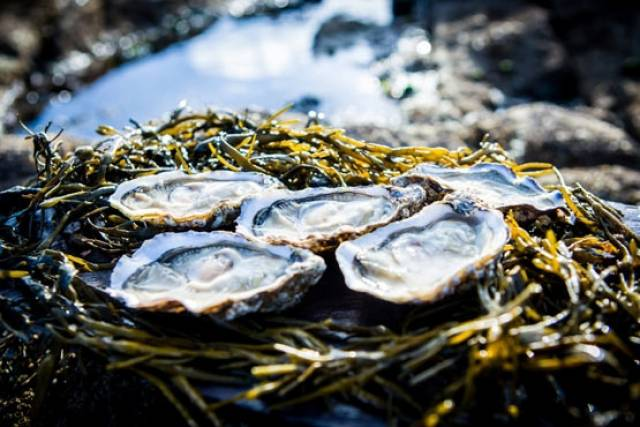 Carlingford Oyster Festival Opens Today